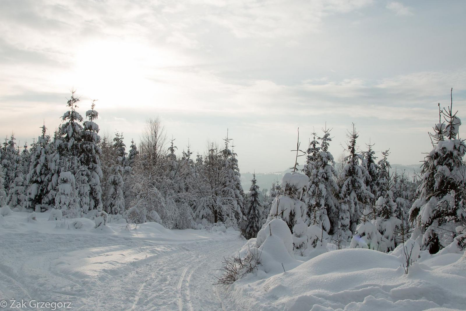 Beskidzkie lasy to raj dla narciarzy biegowych