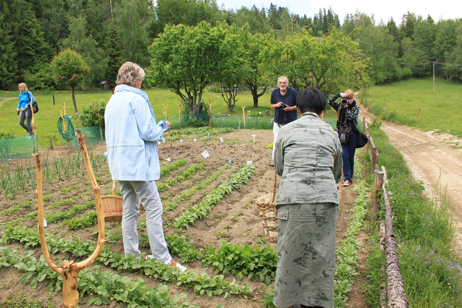 Zajęcia w ziołowym ogródku Akiko