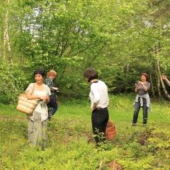 Zbieranie paproci na sałatę w lesie