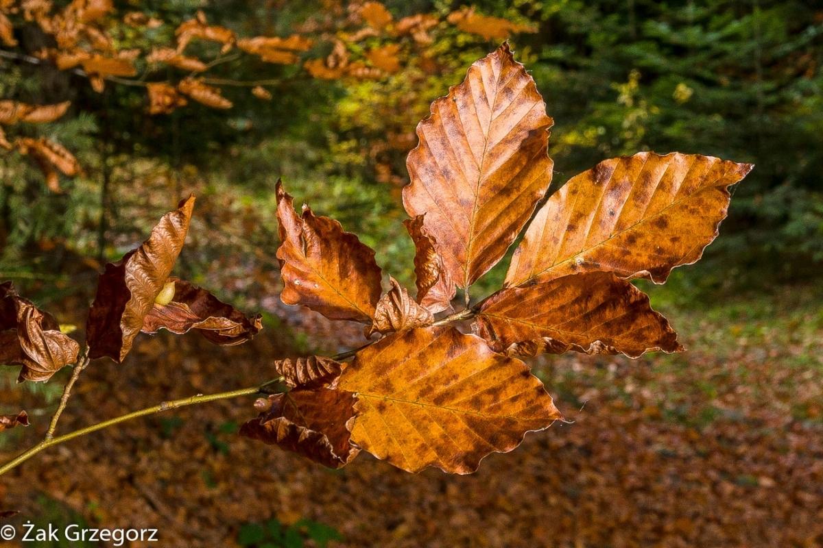 Barwy jesieni naPodhalu...