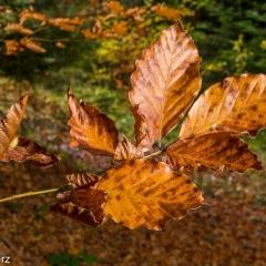Barwy jesieni na Podhalu...
